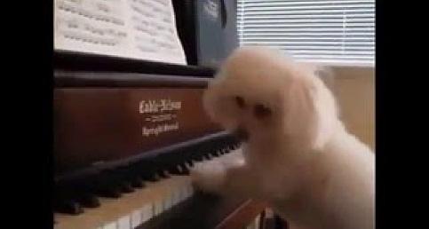 Hem Nota Okuyor Hem de Piyano Çalıyor ;)
